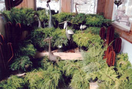 Large selection of Evergreens