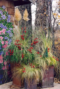 Winter Planting Course - container gardening